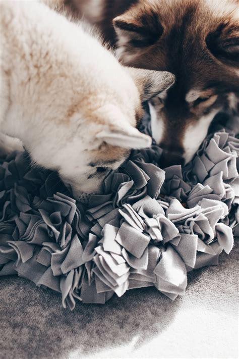 Schnüffeldecke Für Hunde