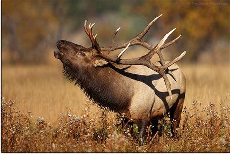canon wildlife lens