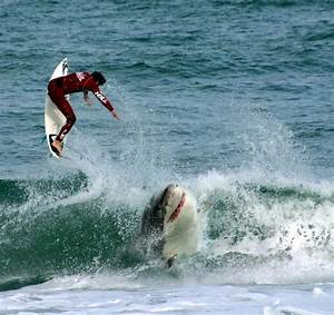 Funny Universe: Shark Attack! Exclusive Photo Shoot