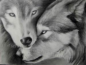 Pencil Sketches Of Wolves 25+ Best Ideas About Wolf ...