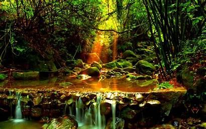 Stream Forest Wasserfall Natur Wallpapers Hintergrundbilder Nature