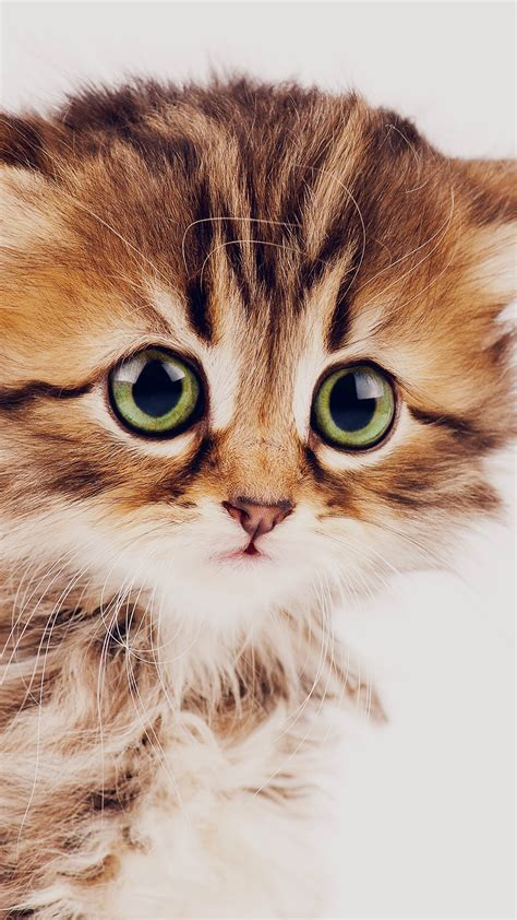 Cat Backgrounds Iphone by Cat Iphone Backgrounds Pixelstalk Net