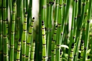comment faire du purin de prele jardinage With prele jardin