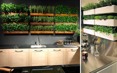 ideas originales  decorar la cocina  plantas
