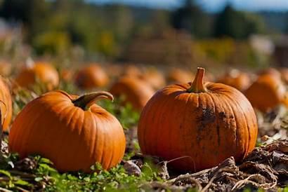 Pumpkin Fall Patch October Desktop Wallpapers Month