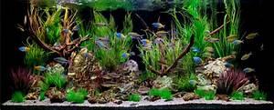 Deko Fische Zum Aufhängen : deko f r aquarium selber machen 30 kreative ideen ~ Lizthompson.info Haus und Dekorationen