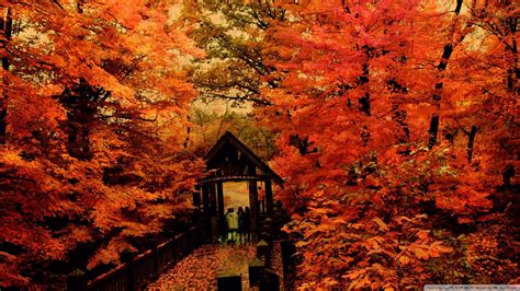 1080p Fall Desktop Backgrounds Hd by 48 Hd 1080p Fall Wallpaper On Wallpapersafari