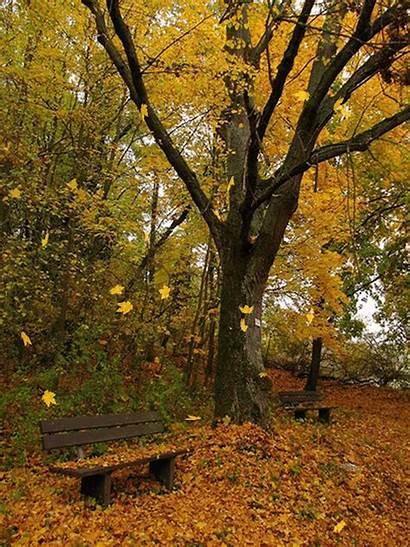 Gifs Bench Autumn Falling Leaves Paisajes Sitting