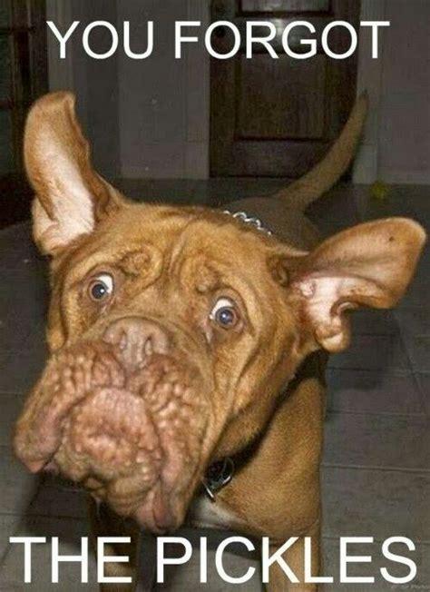 Funny Dog Face Meme - pinterest the world s catalog of ideas