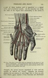 461 Best Images About Vintage Anatomy On Pinterest