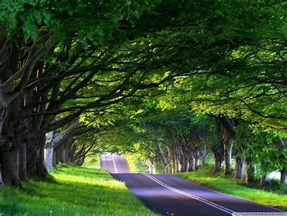 Street Tree Lined Standard