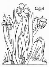 Coloring Daffodil Printable Daffodils Adult Fairy Narzisse Ausmalbilder Floral Flowers Graphics Kid Sheets Drawing Kostenlos Bulbs Malvorlagen Zum Animal Fresh sketch template