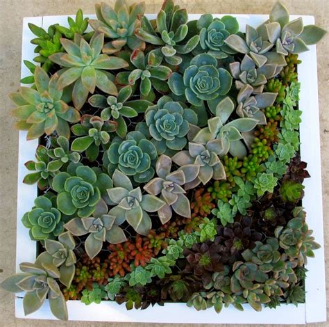 Vertical Garden Frame by Best 25 Succulent Frame Ideas On Succulents