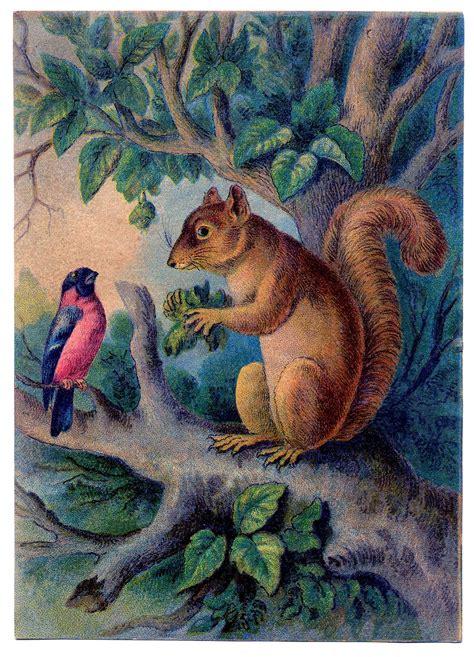 vintage clip art image sweet squirrel  bird