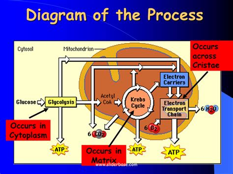 a cell diagram for respiration repair wiring scheme