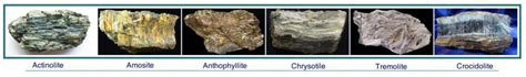 asbestos mesothelioma treatment community