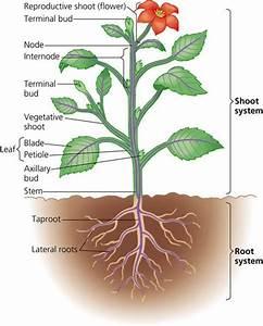 Rozaini Othman  Guru Cemerlang Biologi   Plants 1