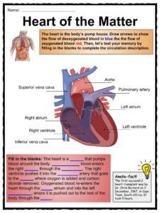 human body facts worksheets key systems  kids