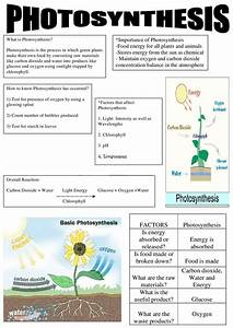 Kkxrdhx  Photosynthesis Summary