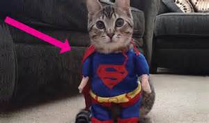 costumes for cats costumes for cats 6 desktop wallpaper funnypicture org