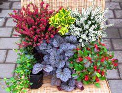 Welche Blumen Blühen Im Winter Draußen : winterharte balkonpflanzen herbst winter ganzj hrig kaufen bei harro 39 s pflanzenwelt ~ Watch28wear.com Haus und Dekorationen