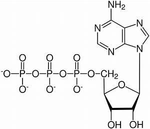 Fichier Atp  Chemical Structure  Svg  U2014 Wikip U00e9dia