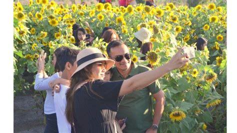 jiwan garden kupang wisata foto kebun bunga matahari