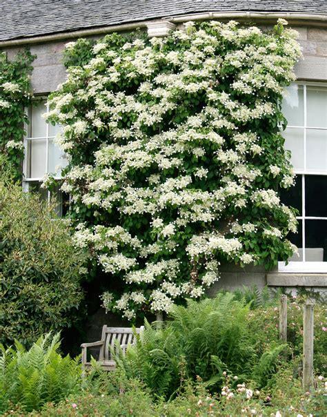 hortensienschnitt im herbst hortensien pflanzen und pflegen birchmeier spr 252 htechnik ag