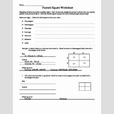 Punnett Square Worksheet By Aussie Science Teacher Tpt