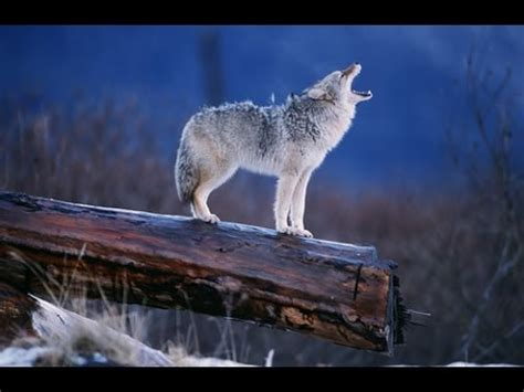 Nature Documentary Amazing Wildlife of Alaska