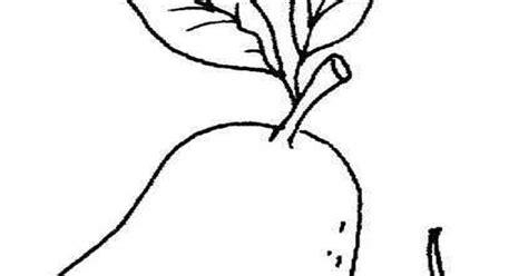 contoh gambar mewarnai gambar jambu biji