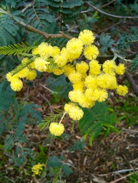 169 Best Images About Australian Native Plants 2 On