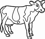 Cow Coloring Pages Drawing Cute Printable Cattle Farm Face Animal Colouring Easy Adults Getcolorings Strange Cows Cartoon Mask Pic Coloringbay sketch template