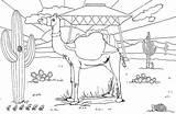 Desert Coloring Camel Landscape Template sketch template