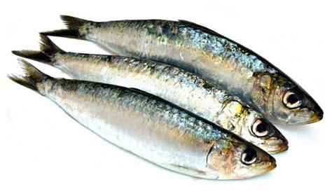 comment cuisiner des filets de sardines sardines à la poêle recette facile et temps de cuisson