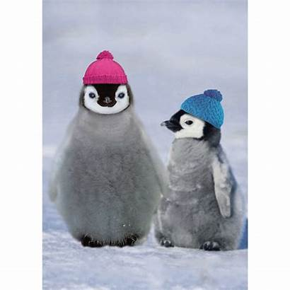 Penguins Christmas Cards Wishes Greeting Inside