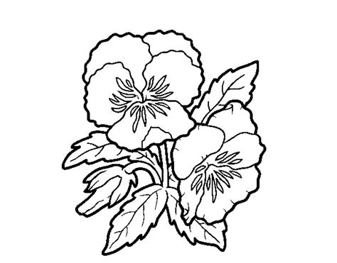 fiori pensiero disegno di fiore di pensiero da colorare acolore