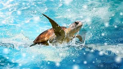 Sea Desktop Turtles Backgrounds Deep Computer Wallpapers