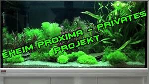 Eheim Proxima 175 : eheim proxima aquarium privater projekt deutsch hd youtube ~ Orissabook.com Haus und Dekorationen