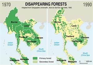 La forêt thaïlandaise, une espèce en voie de disparition ...