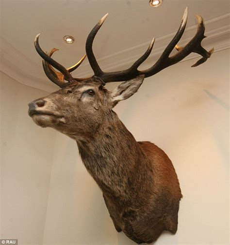 Exmoor Emperor Is Executed Stag's Head On Devon's. Christmas Fairy Decorations. Home Decor Wall Plaques. Renting Wedding Decorations. Blue And White Decor. Faux Leather Living Room Set. Wedding Decorators. Seattle Rooms For Rent. Christmas Decorating Games