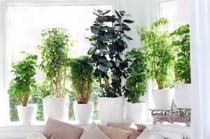 pflanzen wohnzimmer pflanzen wohnzimmer jtleigh hausgestaltung ideen