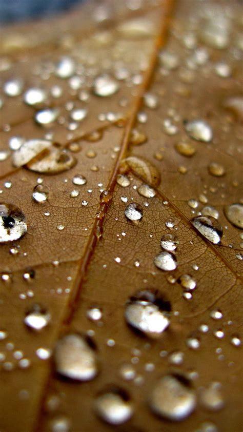 papersco iphone wallpaper nj leaf rain water drop