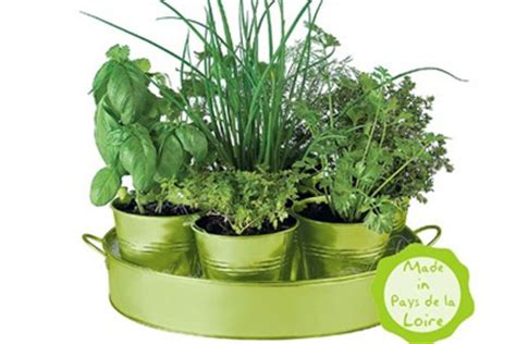 ou acheter cuisine pots d 39 aromates à faire pousser persil ciboulette