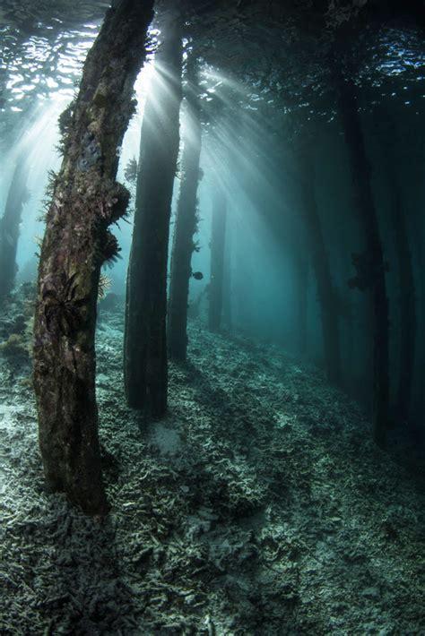 ocean safari scuba blog underwater forest
