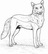 Wolf Coloring Pages Printable Wolves Realistic Drawing Animals Colouring Howling Animal Standing Wild Adults Getdrawings Template Main Draw Games Step sketch template