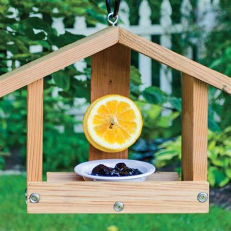 Oriole Feeder Grape Jelly by Oriole Orange Jelly Feeder At Hill Nurseries