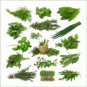 Лекарственные травы для восстановления печени