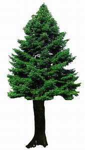Christmas Tree PNG Transparent Image - PngPix