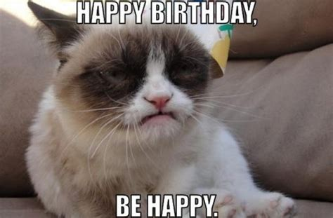 Happy Birthday Meme Cat - happy birthday cats funny www imgkid com the image kid has it